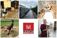 TOP5  dolnośląskich schronisk dla bezdomnych zwierząt (GŁOSOWANIE)