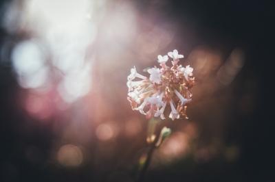Wiosna! [ZDJĘCIA]