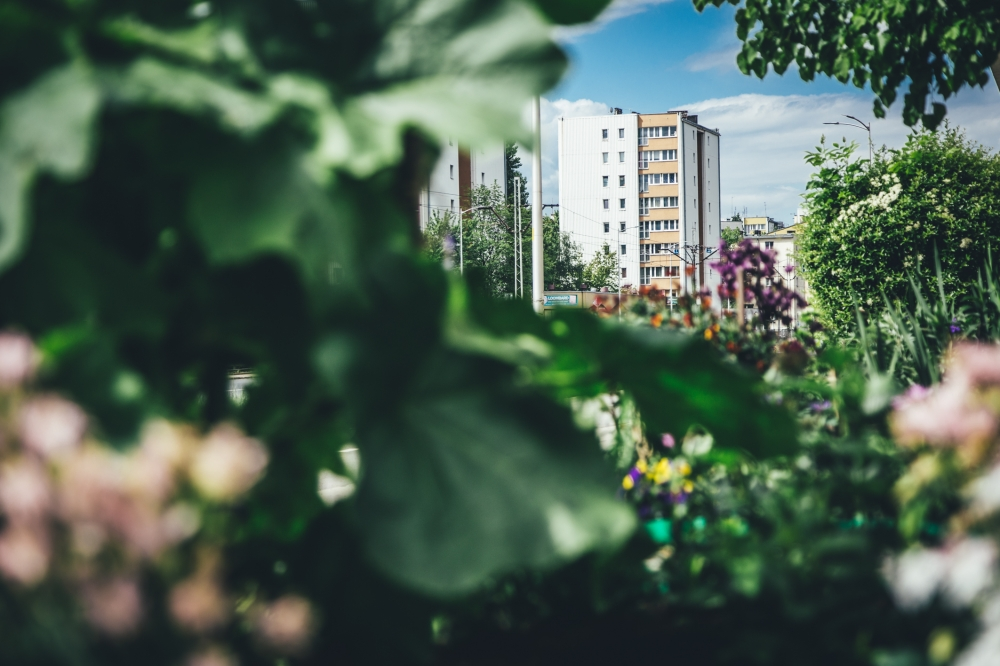Miejska dżungla [FOTOSPACER]