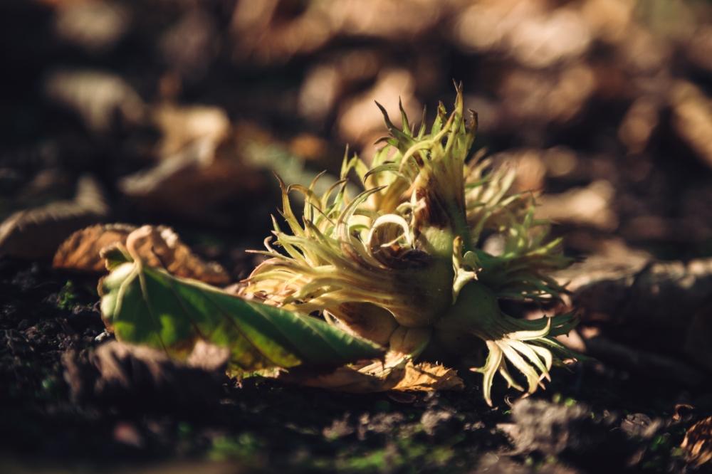 Pierwsze oznaki jesieni [FOTOSPACER]